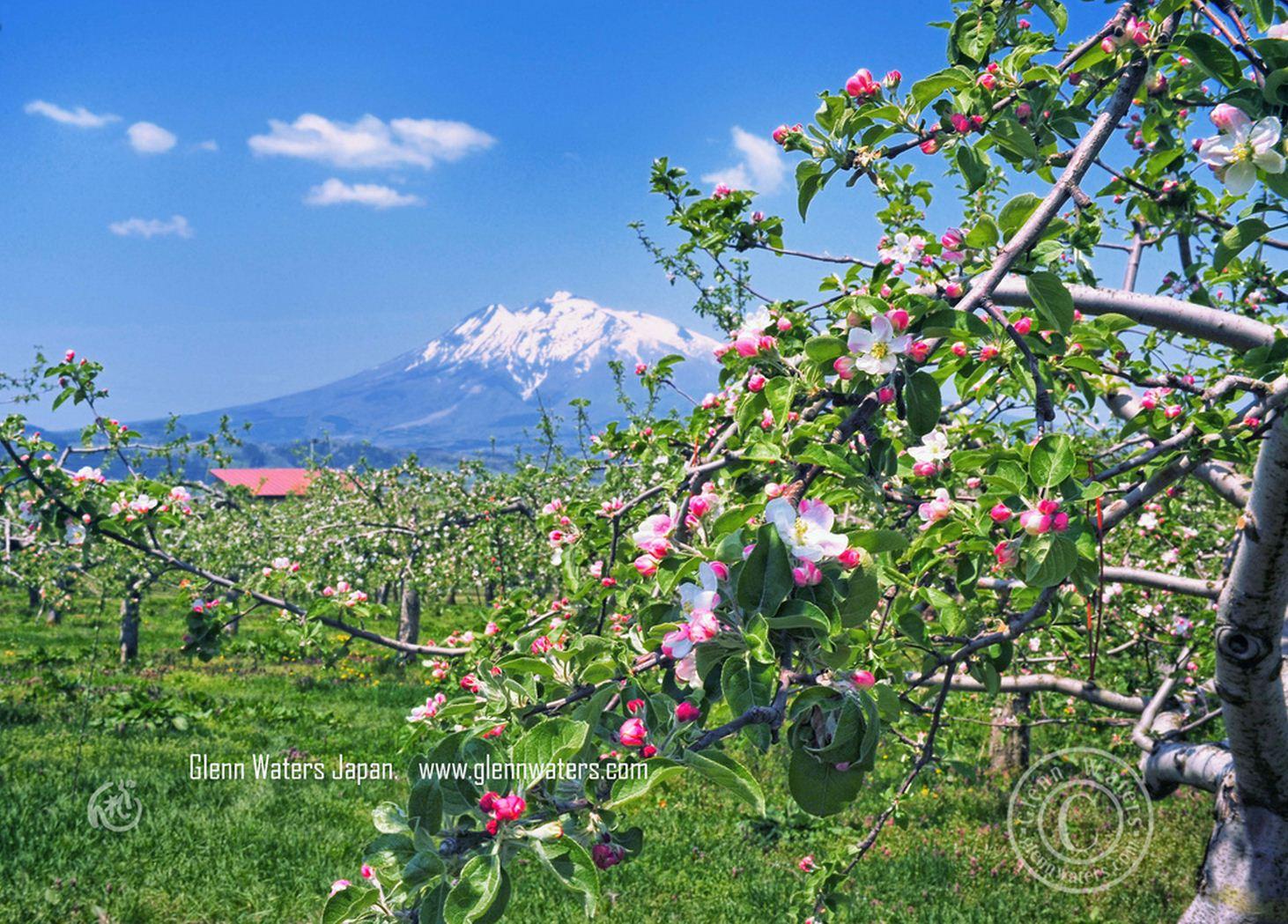 Новый климат – новые яблоки!