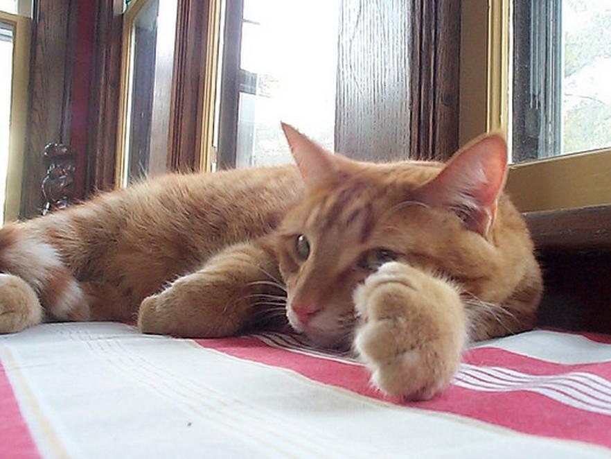 Коты всех мастей из новостей TopClimat.ru