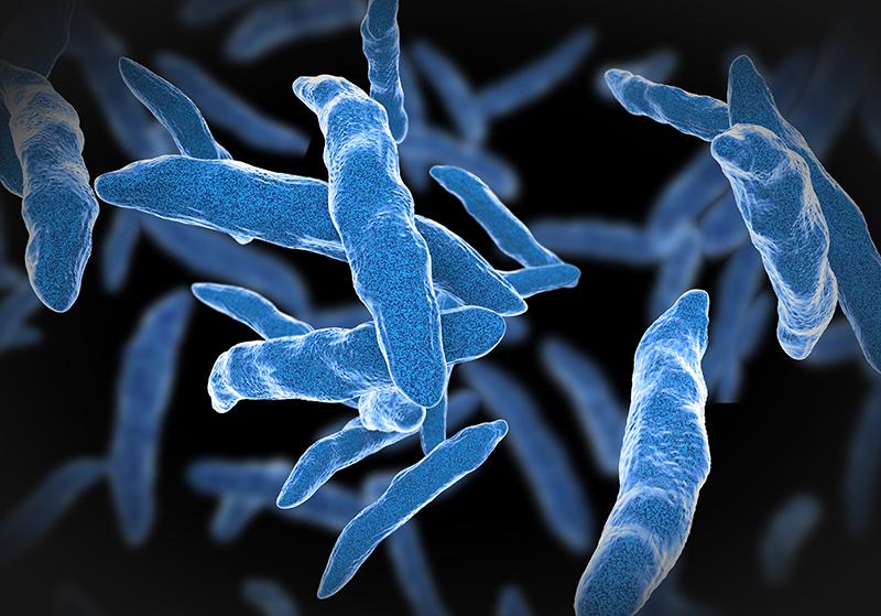 Микроорганизмы, распространенные в окружающей среде